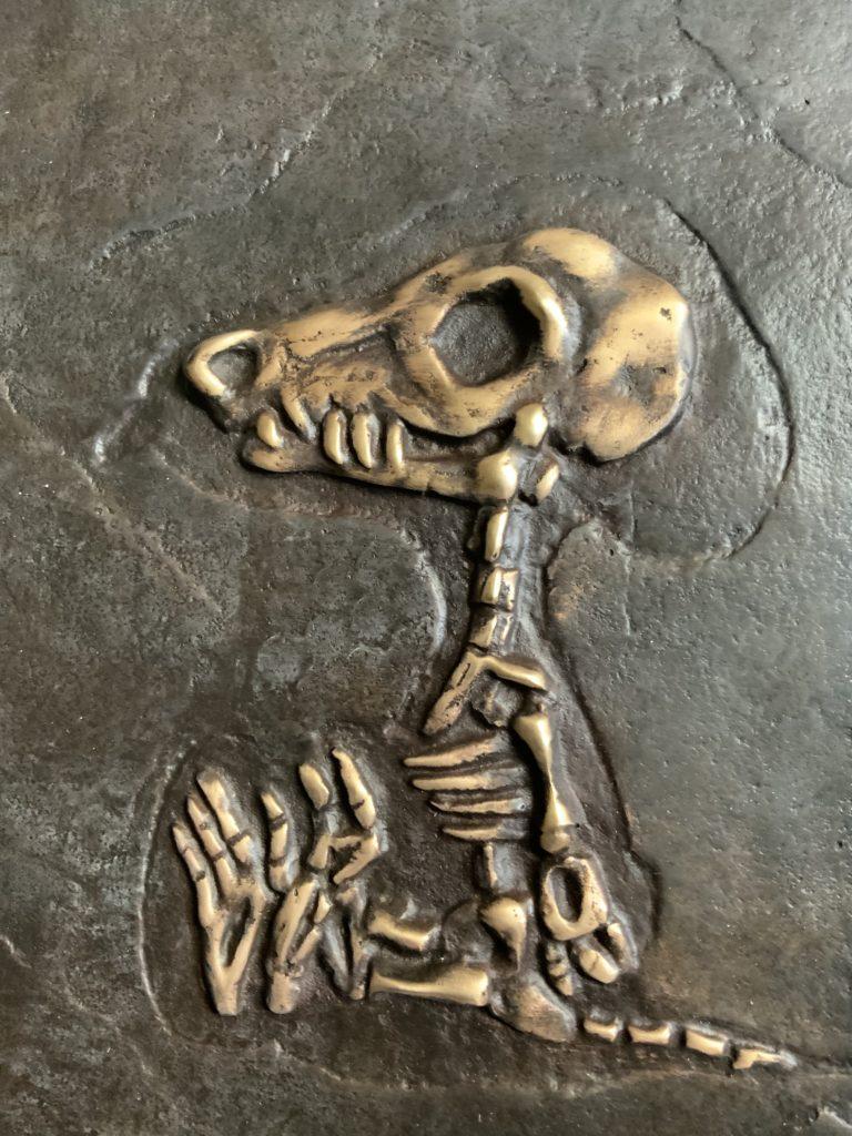 Snoopynisaurius